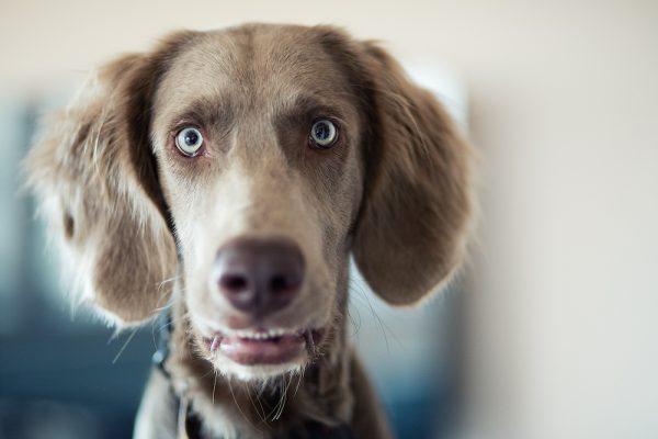 Wann darf ich einen Hund aus einem heißen Auto befreien?